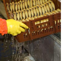 water: cleaned crab shells food industry